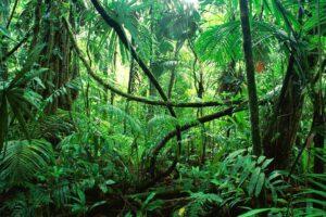 grünes Dickicht als Metapher für den Coaching-Dschungel
