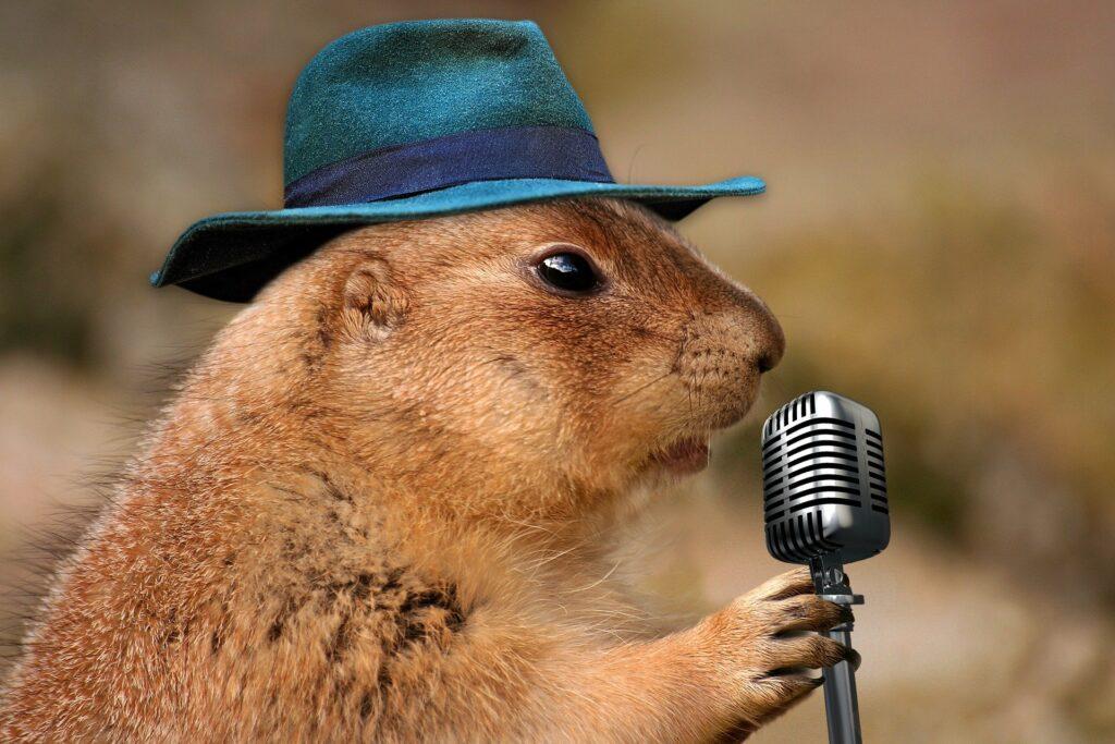 Erdmännchen mit coolem Hut vor einem Mikrofonständer