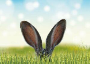 Gespitzte Hasenohren ragen aus einer Graswiese hervor.